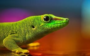Картинка Ящерица, зелёная, рептилия, радужные цвета