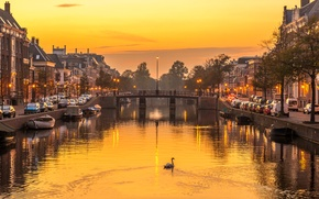 Картинка мост, река, дома, вечер, лебедь, Нидерланды, Харлем