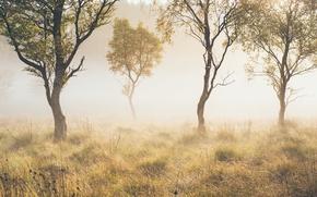 Картинка осень, деревья, туман
