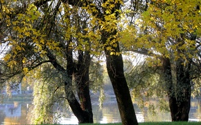 Картинка деревья, озеро, Осень, trees, water, autumn, сентябрь, fall