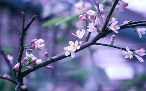 Обои цветы, веточка, ветка, весна, розовые, цветение, боке
