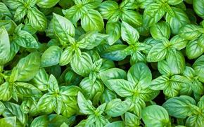 Картинка green, leaves, plant