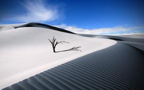 Картинка песок, лето, небо, пустыня, деревцо