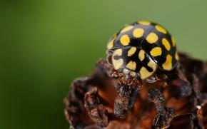 Картинка black, yellow, insect
