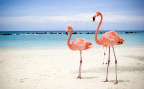 Картинка море, пляж, фламинго