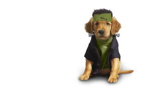 Картинка одежда, щенок, Dog, clothing, Animals