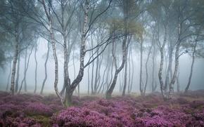 Картинка лес, деревья, цветы, природа