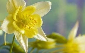 Картинка макро, цветы, желтый, весна, Цветок, нарцисс