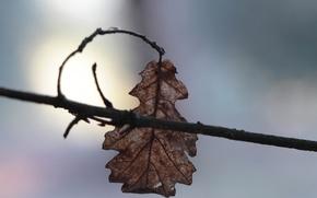 Картинка макро, лист, ветка, дубовый