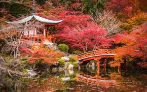 Обои осень, деревья, пруд, парк, камни, Япония, пагода, мостик, беседка, Киото, кусты, красочно