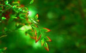 Картинка листья, макро, красный, зеленый, фон, дерево, widescreen, обои, размытие, листик, wallpaper, форма, листочек, широкоформатные, background, …