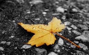 Обои жёлтый, лист, капельки, асфальт, осень, дождь
