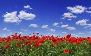 Картинка небо, облака, цветы, Маки