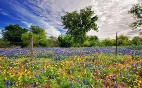 Обои цветы, небо, весна, природа