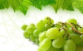 Обои лист, виноград, гроздь
