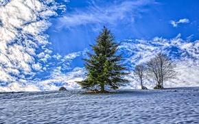 Картинка небо, снег, дерево