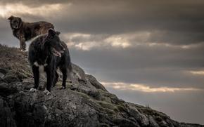 Картинка собаки, природа, скалы, даль