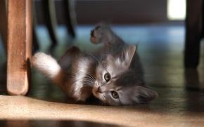 Обои котенок, 157, пол
