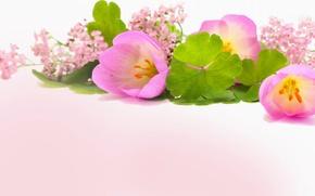 Картинка листья, тюльпан, букет, лепестки
