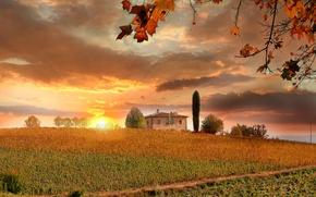 Картинка осень, небо, листья, солнце, облака, деревья, закат, ветки, дом, поля, Италия, кусты, плантации, Тоскана, Tuscany