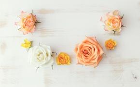 Обои wood, rose, flowers