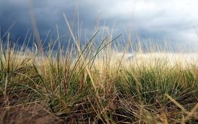 Обои поле, небо, Трава