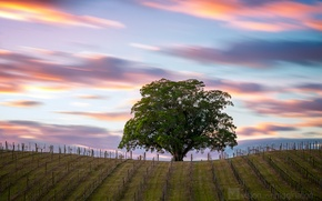 Картинка дерево, Австралия, поле, небо, облака, выдержка