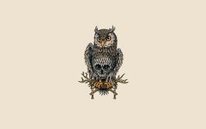 Картинка сова, птица, светлый фон, owl