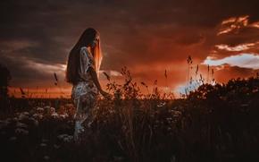 Картинка поле, лето, закат, Evgenya