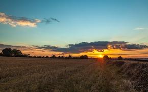 Картинка поле, закат, деревья. солнце