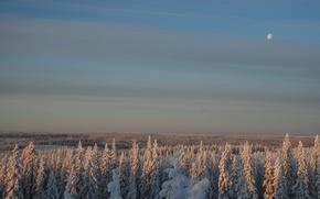 Обои Лес, небо, луна, снег, зима