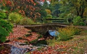Картинка листья, деревья, скамейка, мост, пруд, парк, Англия, Ardingly