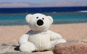Картинка море, лето, радость, настроение, берег, игрушка, медведь