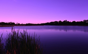 Картинка лес, озеро, сиреневый, рассвет, утро, камыш