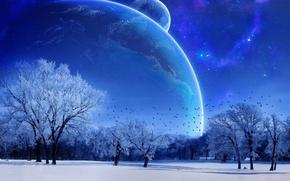 Обои зима, небо, деревья, голубой, луна