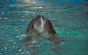 Картинка животные, вода, природа, пара, дельфины