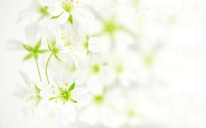 Обои цветы, фото
