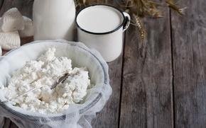 Обои сыр, молоко, творог, cheese, молочные продукты, cottage cheese, dairy products