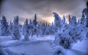 Картинка Юлляс, снег, зима, деревья, Лапландия, Finland, Акасломполо, Финляндия, Ylläs, Äkäslompolo, Lapland, лес