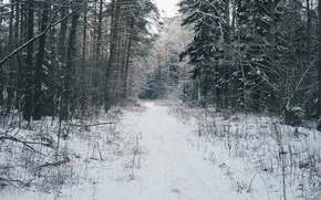 Картинка лес, снег, атмосфера, Зимний