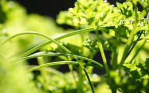 Картинка зелень, трава, листья, макро, зеленый, фон, widescreen, обои, wallpaper, широкоформатные, background, полноэкранные, HD wallpapers, широкоэкранные, ...