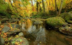 Обои камни, лес, ручей, деревья, осень, мох, листья