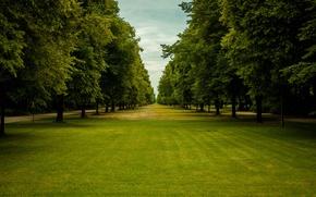 Картинка grass, trees, park, people