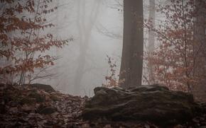 Картинка осень, лес, туман, forest, nature, Autumn, fog