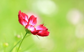 Картинка лепестки, луг, поле, цветок, стебель
