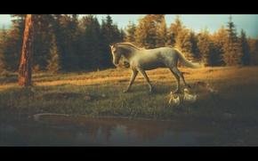 Картинка лес, природа, пруд, лошадь, утки, by Neverrmind