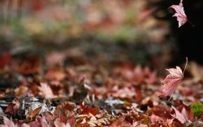 Картинка осень, природа, листва, паутина