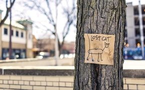 Картинка кот, дерево, улица, lost, юмор, cat, объявление, пропал