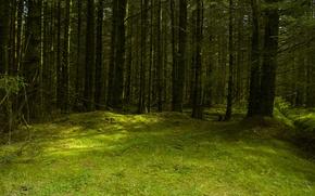 Картинка лес, лето, поляна