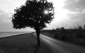 Обои Дерево, дорога, Черно-белая
